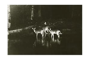 A Doe and Her Fawns are Caught by a Camera by George Shiras