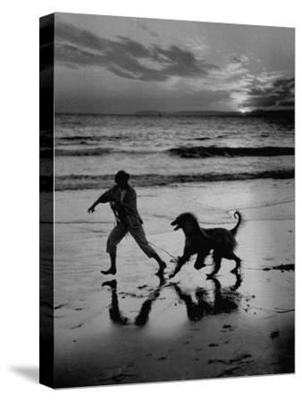 Afghan Dog Roaming across Beach with Girl at Sundown, During Preparation for Westminister Show