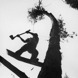 Lumberjack Cutting Tree in New Zealand by George Silk