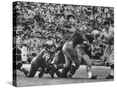 Navy's Prize Halfback Joe Bellino Dragging Tacklers in a Game Against Notre Dame