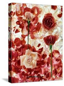 Roses by George Silk