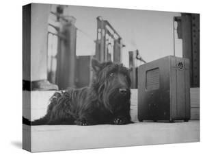 Franklin D. Roosevelt's Dog Fala, Listening to the President's Speech on the Radio by George Skadding