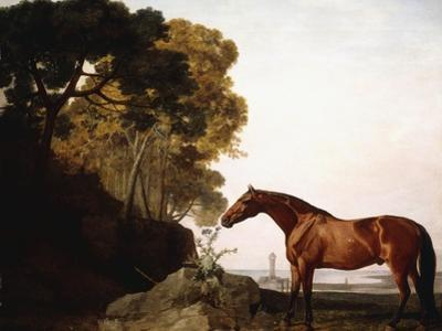 A Bay Arab in a Coastal Landscape, 1779 by George Stubbs