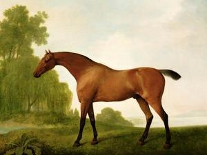 A Bay Thoroughbred in a Landscape, 1801 by George Stubbs