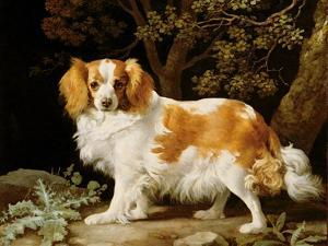 A Liver and White King Charles Spaniel in a Wooded Landscape, 1776 by George Stubbs