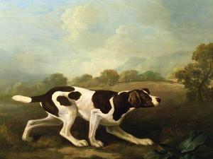 A Pointer by George Stubbs
