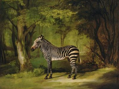 A Zebra, 1763