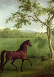 An Arabian Stallion Beneath a Tree, C.1761-63 by George Stubbs