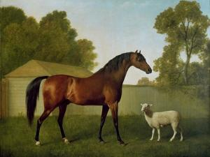 Dungannon, the Property of Colonel O'Kelly, Painted in a Paddock with a Sheep, 1793 by George Stubbs