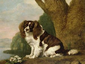 Fanny, a Brown and White Spaniel, 1778 by George Stubbs