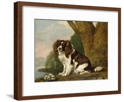 Fanny, a Brown and White Spaniel, 1778