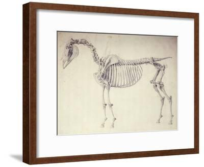 Fifth Anatomical Table, from 'The Anatomy of the Horse'