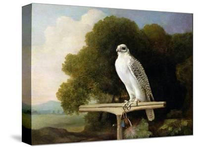 Greenland Falcon (Grey Falcon), 1780 (Oil on Panel)