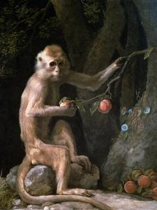 Portrait of a Monkey Dated 1774 by George Stubbs