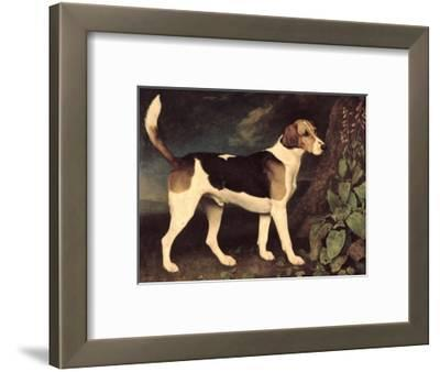 Ringwood, a Brocklesby Foxhound, 1792