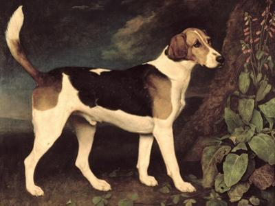 Ringwood, a Brocklesby Foxhound, 1792 by George Stubbs