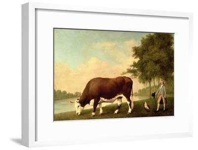 The Lincolnshire Ox, C.1790