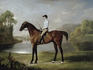 "The Marquess of Rockingham's ""Scrub"", with John Singleton Up, 1762 by George Stubbs"