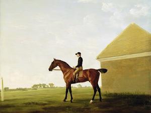 Turf, c.1765 by George Stubbs