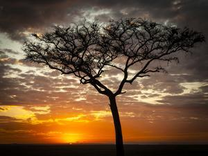 Africa, Kenya, Masai Mara, sunrise by George Theodore