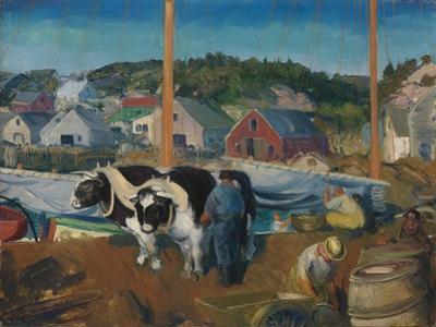 Ox Team, Wharf at Matinicus, 1916