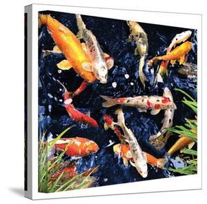 George Zucconi 'Koi' Wrapped Canvas by George Zucconi
