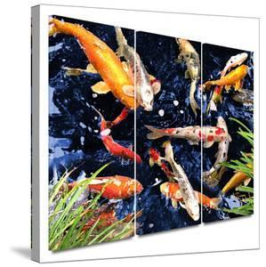 Koi 3 piece gallery-wrapped canvas by George Zucconi