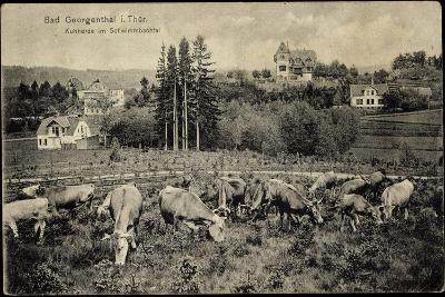 Georgenthal Thüringen, Kuhherde Im Schwimmbachtal, Berge--Giclee Print