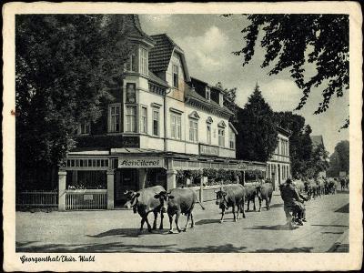 Georgenthal Thüringer Wald, Kühe Auf Der Straße, Konditorei--Giclee Print