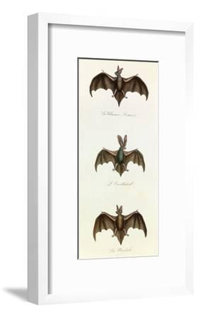 Bats, 'Quadrupeds', from De Buffon