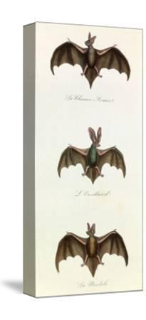 Bats, 'Quadrupeds', from De Buffon