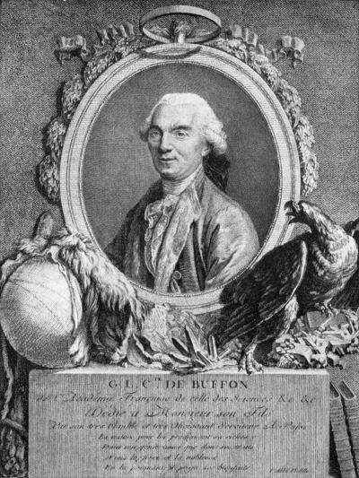 Georges-Louis Leclerc, Comte De Buffon, French Naturalist, 18th Century--Giclee Print
