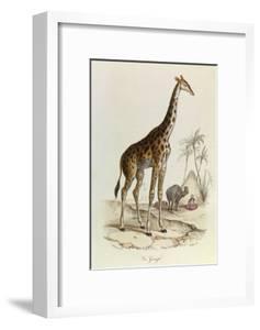 The Giraffe, 'Quadrupeds', from De Buffon by Georges-Louis Leclerc
