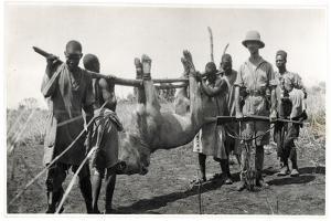 Lion at Bahr El Ghazal, Am Dafok, 1925 by Georges-Marie Haardt