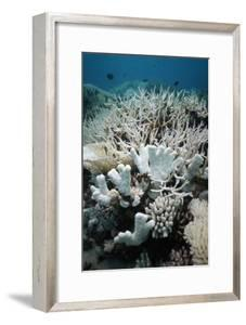 Bleached Coral by Georgette Douwma