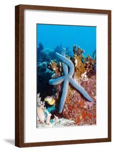Blue Starfish by Georgette Douwma