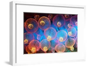 Bubble Tip Anemone by Georgette Douwma
