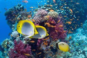 Coral Reef Scenery with Fish by Georgette Douwma