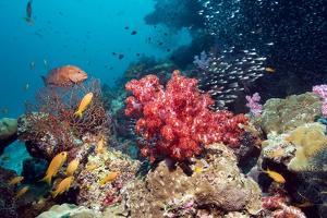 Coral Reef, Thailand by Georgette Douwma