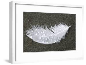 Feather by Georgette Douwma