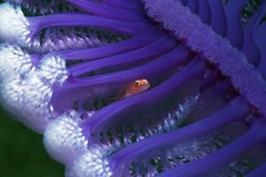 Fish Hiding In a Sea Pen by Georgette Douwma
