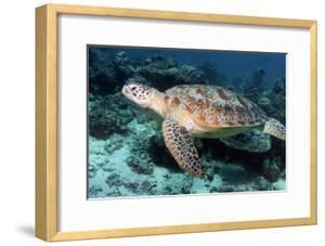 Green Turtle by Georgette Douwma