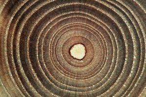 Growth Rings of a Tree by Georgette Douwma