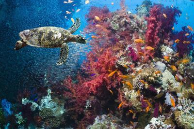 Hawksbill Turtle by Georgette Douwma