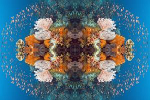 Kaleidoscopic image of Coral reef scenery with gorgonian and Lyretail anthias, Indonesia by Georgette Douwma