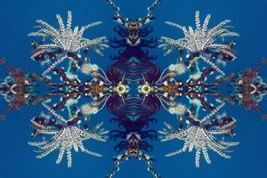 Kaleidoscopic image of Feather stars and Gorgonian wrapper anemone, Indonesia by Georgette Douwma