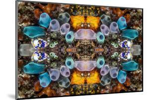 Kaleidoscopic image of Tunicates including Golden seasquirt, North Sulawesi, Indonesia by Georgette Douwma