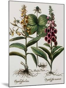 Medicinal Plants by Georgette Douwma