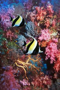 Moorish Idols by Georgette Douwma