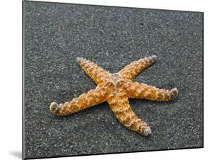 Ochre Seastar, Exposed on Beach at Low Tide, Olympic National Park, Washington, USA by Georgette Douwma